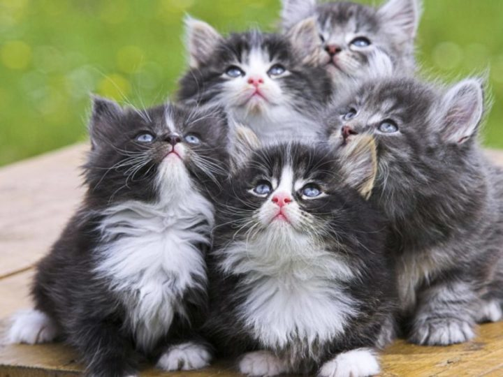 sonhar com gatos
